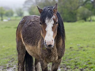 Horse Mud Fever