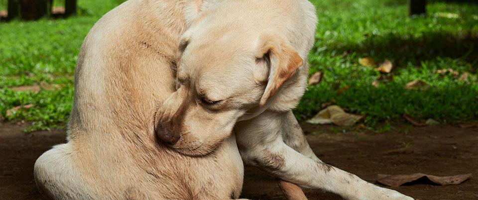 non stinky stuff dogs
