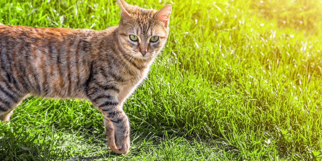 products to keep cats off leather furniture
